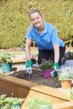 Retrato del jardinero de paisaje de sexo femenino Planting Flower Bed en lepisosteus Foto de archivo libre de regalías
