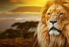 Retrato del león en paisaje de la sabana