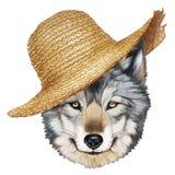 Retrato del lobo con el sombrero de paja Fotos de archivo libres de regalías