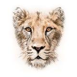 retrato del Mano-dibujo de una leona ilustración del vector