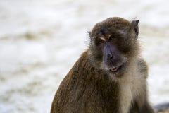 Retrato del mono Foto de archivo