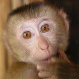 Retrato del mono del bebé Fotografía de archivo