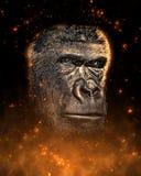 Retrato del mono en fuego Imagen de archivo