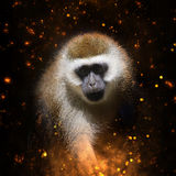 Retrato del mono en fuego Fotografía de archivo libre de regalías