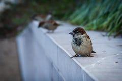 Retrato del pájaro Fotografía de archivo libre de regalías