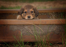 Retrato del pequeño perrito triste lindo hermoso Imagenes de archivo