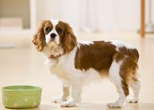 Retrato del perrito con el plato del perro fotografía de archivo