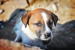 Retrato del perrito en modo emocional Expectational, sintiendo imagenes de archivo