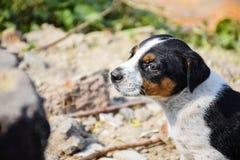 Retrato del perrito en modo emocional Expectational, sintiendo imagen de archivo
