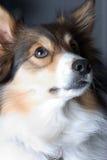 Retrato del perro. fotografía de archivo