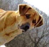 Retrato del perro imágenes de archivo libres de regalías