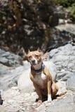 Retrato del perro Imagen de archivo