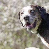 Retrato del perro Fotografía de archivo