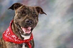 Retrato del perro Foto de archivo libre de regalías