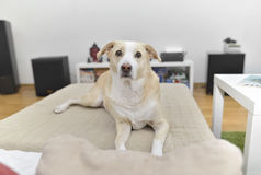 Retrato del perro Fotografía de archivo libre de regalías