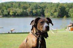 Retrato del perro con el fondo del lago Fotos de archivo