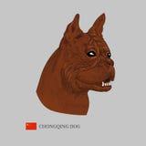 Retrato del perro de Chongqing Imagen de archivo libre de regalías