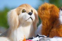 Retrato del perro de juguete suave de la felpa imagen de archivo libre de regalías