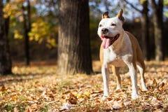 Retrato del perro de la felicidad, fondo de la falta de definición foto de archivo libre de regalías