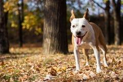 Retrato del perro de la felicidad, fondo de la falta de definición fotos de archivo