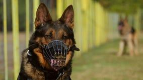 Retrato del perro de la gendarmería Imagen de archivo libre de regalías