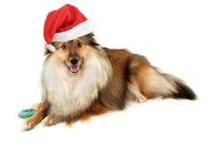 Retrato del perro de la Navidad fotografía de archivo
