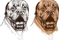 Retrato del perro del boxeador Imagen de archivo libre de regalías