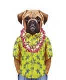 Retrato del perro del boxeador en una camisa del verano con los leus hawaianos stock de ilustración