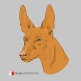 Retrato del perro del faraón Fotografía de archivo libre de regalías