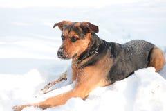 Retrato del perro en blanco Imagenes de archivo