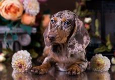 Retrato del perro en fondo del otoño Fotos de archivo libres de regalías