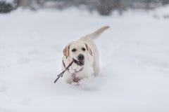 Retrato del perro en la nieve Foto de archivo
