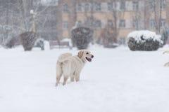 Retrato del perro en la nieve Imagenes de archivo