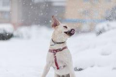Retrato del perro en la nieve Imagen de archivo libre de regalías