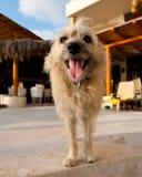 Retrato del perro lanudo lindo Imagen de archivo