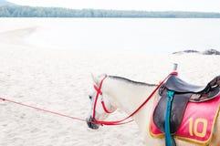 Retrato del potro blanco árabe hermoso del caballo en el fondo del mar Imagenes de archivo