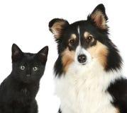 Retrato del primer de un gatito y de un perro Imágenes de archivo libres de regalías