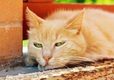 Retrato del primer del gato triste del jengibre al aire libre Imagen de archivo libre de regalías