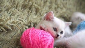 Retrato del primer del gatito con las bolas de hilos almacen de video