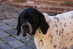Retrato del primer del perro sin hogar Imagen de archivo