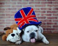 Retrato del sombrero del dogo francés con la bandera del Reino Unido Imagen de archivo libre de regalías