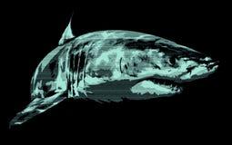 Retrato del tiburón Fotografía de archivo