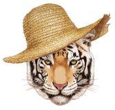 Retrato del tigre con el sombrero de paja Imágenes de archivo libres de regalías