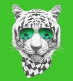 Retrato del tigre con las gafas de sol y la bufanda Cara a mano de las mujeres de illustration stock de ilustración