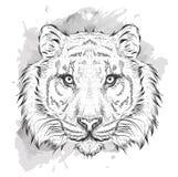 Retrato del tigre del drenaje de la mano Tienda extrema del deporte Imagenes de archivo