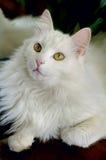 Retrato del tomcat imagenes de archivo