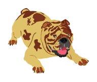 Retrato del vector inglés del dogo ilustración del vector