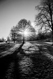 Retrato descubierto de los árboles del invierno Imágenes de archivo libres de regalías