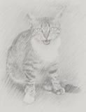Retrato desenhado de um gatinho Imagens de Stock Royalty Free