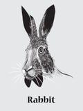 Retrato dibujado mano del conejo Foto de archivo libre de regalías